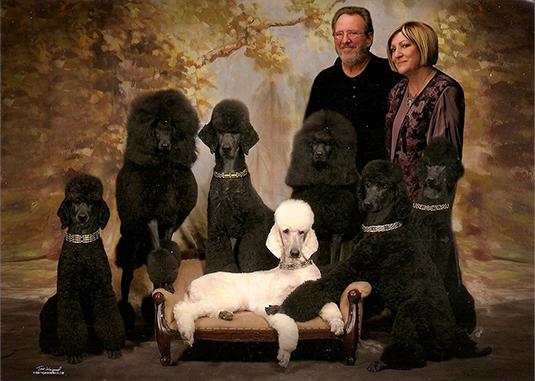 Majessa Standard Poodles
